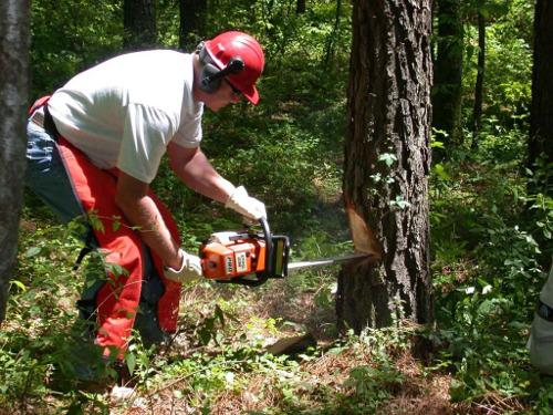 Tree Contractors Sheffield