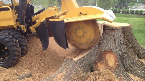 Tree Crown Reduction Penistone