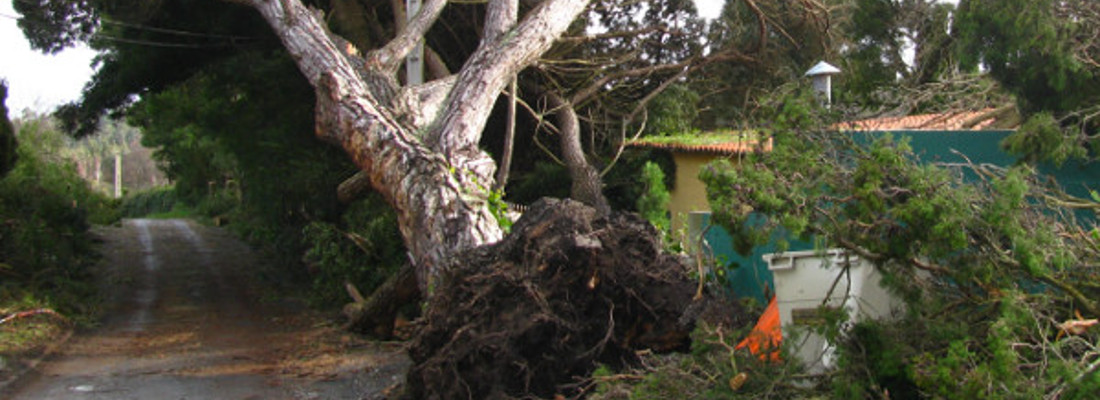 Tree Removal Wombwell